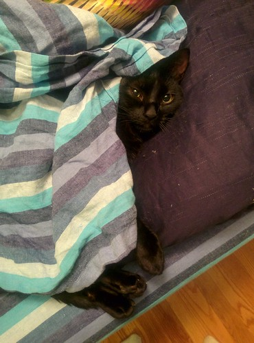 Toph, in her preferred hiding place: buried in blankets.