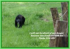 Bear at Cade's Cove Loop, Gatlinburg TN
