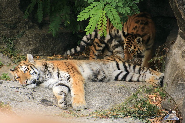 Tierpark Berlin 16.08.2015  0120