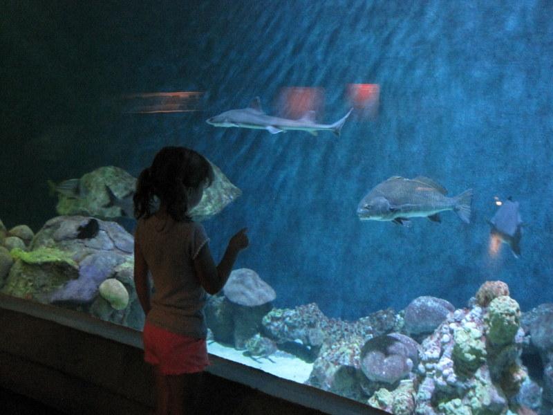 Museum Aquarium (10)