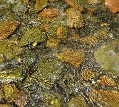 stream, algae, seaweed, water, geology, rock, wildlife,