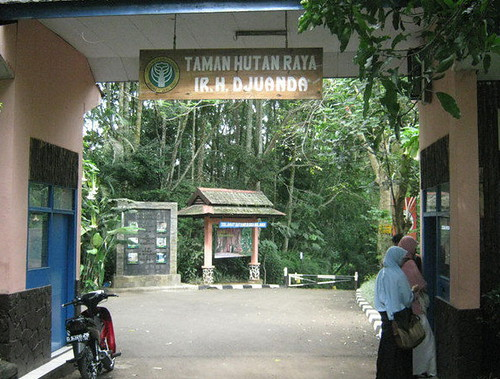 taman hutan