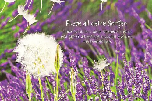 Lavendel Labyrinth « Brigitte Stolle