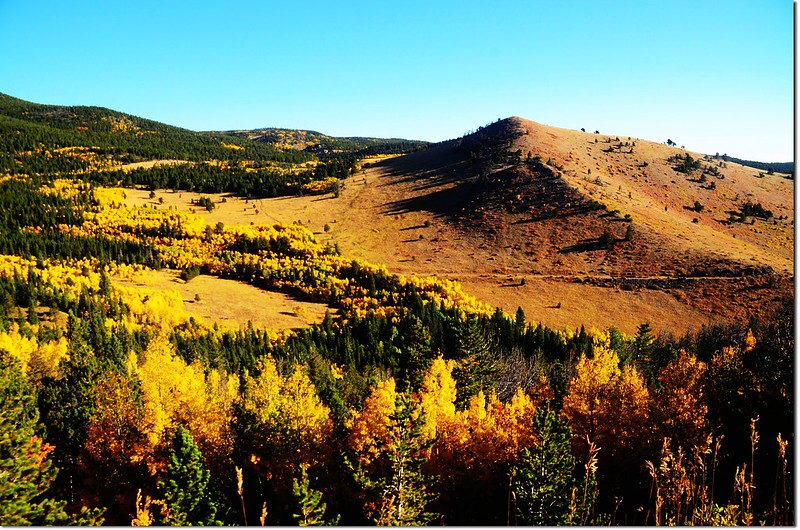Fall colors by Peak to Peak HWY 3