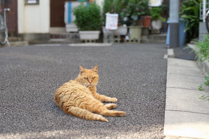 東京路地裏散歩 ネコ 2015年9月23日
