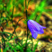Harebell 2 by mapletreejapaneese