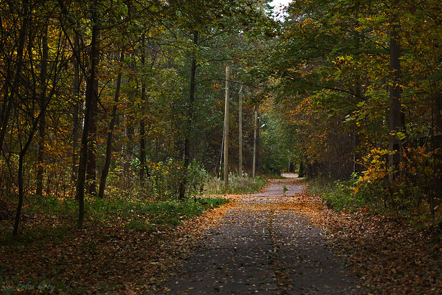 autumn_roads_12