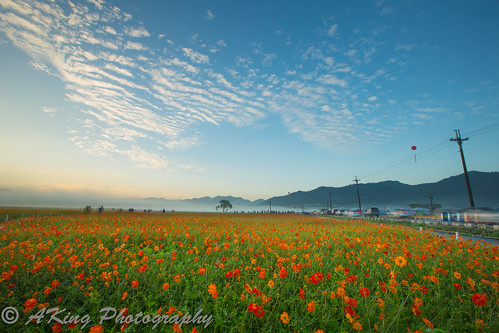 morning autumn sky cloud mist sunrise landscape dawn countryside scenery taiwan landmark taichung 台灣 台中 花海 新社 日出 晨