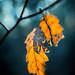 Fall 9692