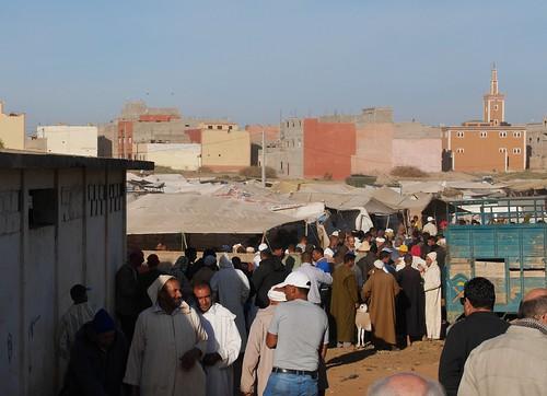 tiere morocco marokko