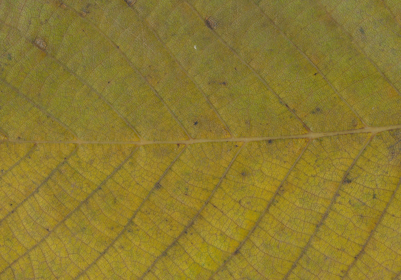 CreativeCommons - Autumn leaves - 2015 Series 1 - 10 by #TexturePalace