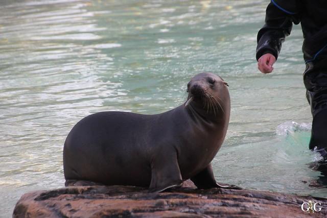 Besuch im Berliner Zoo 06.12.201535