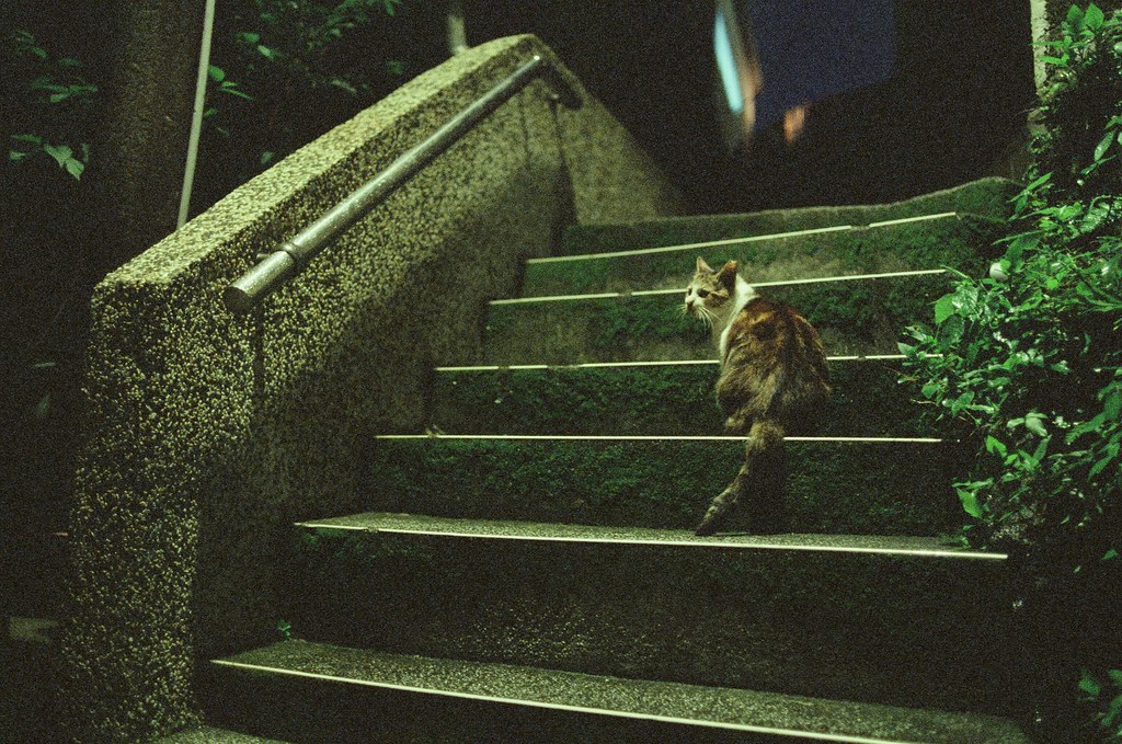九份 KODAK 500T 5219 V3 2015/11/14 待到晚上的九份,一路上看到一些很可愛的阿貓阿狗,其中有一隻超黏的肥肥貓,真的很肥,我都有點懷疑牠是真的流浪貓嗎?還有一隻很淡定的柴犬,一直站在階梯中間,每個人過去都摸摸牠。  Nikon FM2 Nikon AI AF Nikkor 35mm F/2D KODAK 500T 5219 V3 4754-0024 Photo by Toomore