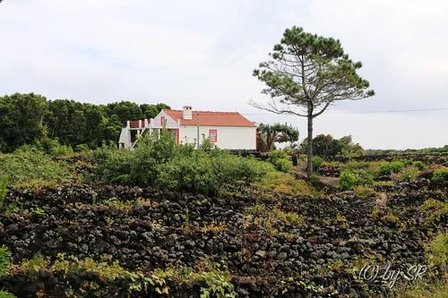 Azores2014_0562
