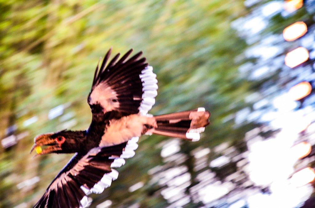 Bird catching FoW AK