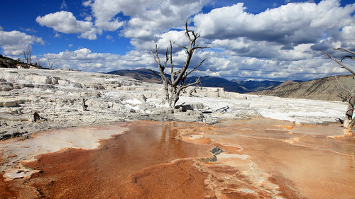 Yellowstone NP - The Magic of Mammoth Springs