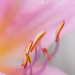 Simply Pastel... by zoomclic