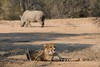 Cheetah and Rhino by Natalie.Imagegallery