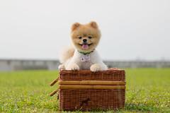Mochi_the_mini_lion-22