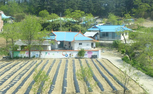 Co-Gangneung-Sokcho-Bus (1)