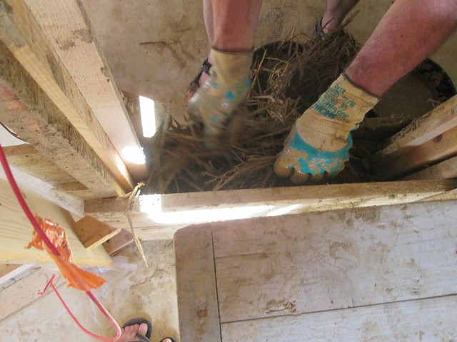 Andreas montre le travail de banchage en terre et paille