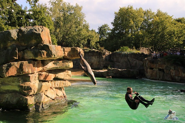 Zoo Berlin 18.09.2015   056