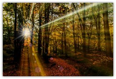 chopwell in autumn