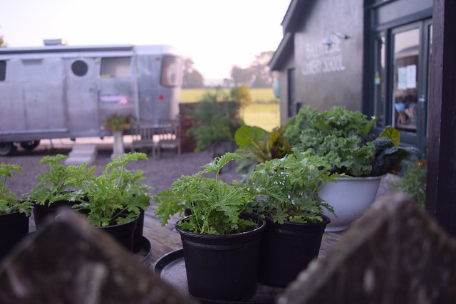 Sweet Geranium (the iconic Ballymaloe herb) and Darina Allen's Food Truck