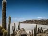 Isla Incahuasi, Bolivia by Justgetdancey