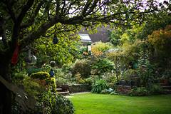 My Autumn garden