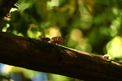 Champignons arboricoles