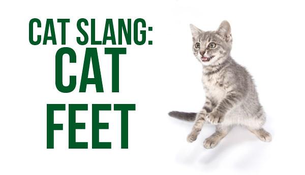 cat-feet-cat-slang