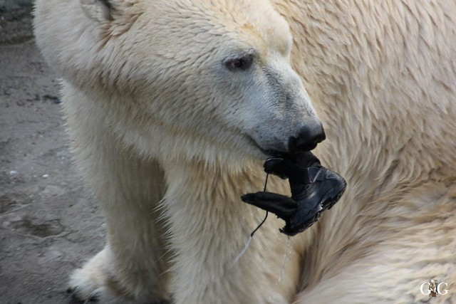 Besuch Winter Zoo Hannover 28.11.201585