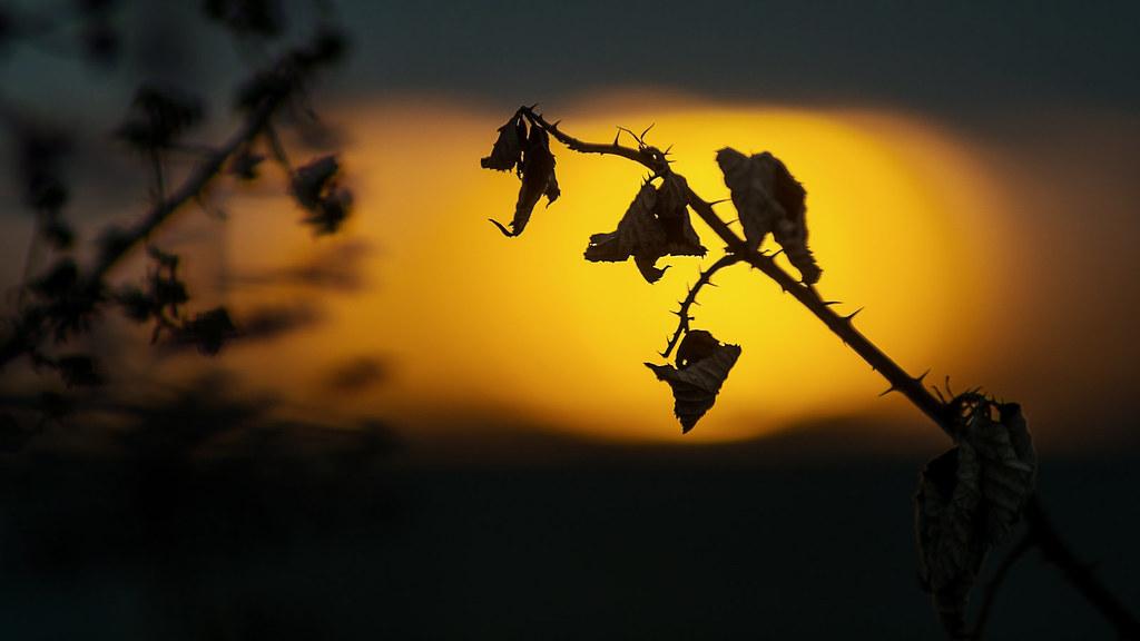 Autumn sunset...