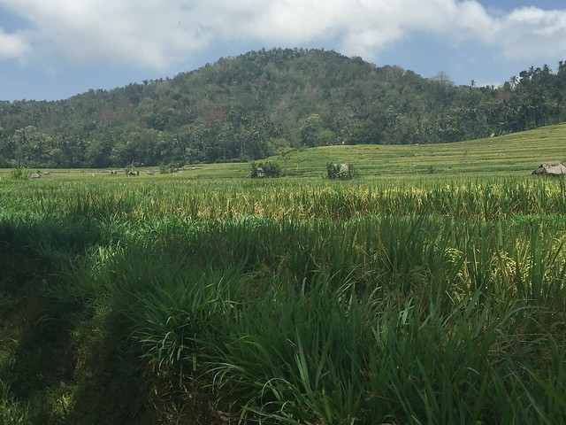 2015-09-30-Bali-153