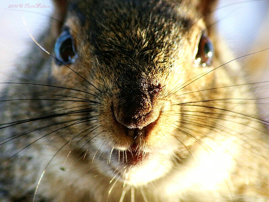 A squirrels nose knows