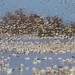 Sacramento National Wildlife Refuge by Atascaderocoachsam