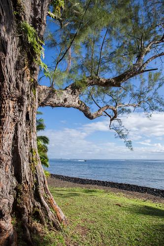 sky tree nature polynesia lotus coconut vert rivière ciel tahiti arbre nenuphar cocotier polynésie teahupoo