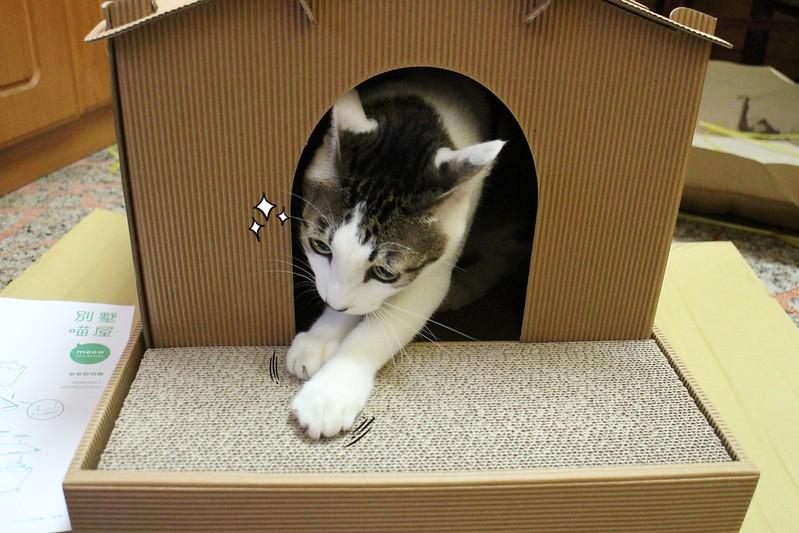 喵屋,寵物精品生活館,生活記事,貓咪,阿貴 @陳小可的吃喝玩樂