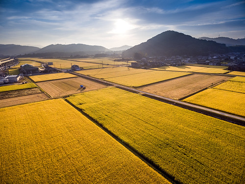 autumn mountain field japan sunrise landscape scenery rice natural asahi harvest 日本 秋 自然 山 風景 okayama 景色 岡山 日の出 稲 phantom3 朝日 田 収穫 dji photones