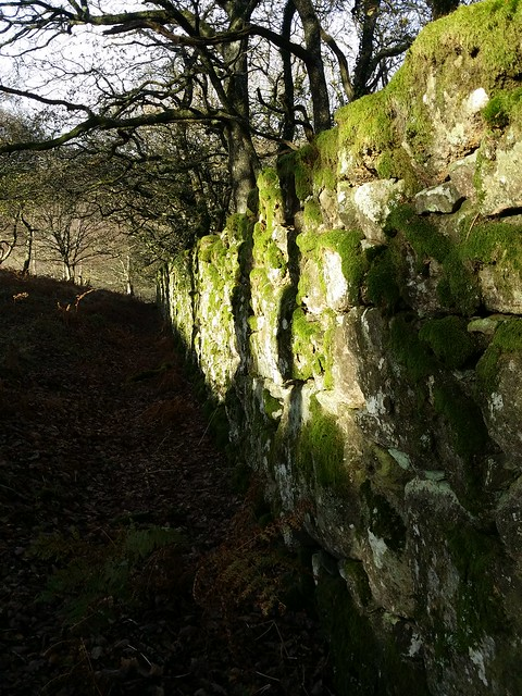 Following the wall down to the Teign