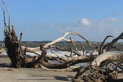 Driftwood 788