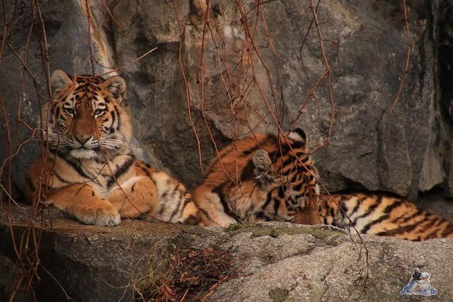 Tierpark Berlin 29.11.2015   64