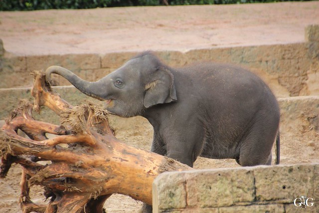 Besuch Winter Zoo Hannover 28.11.201520
