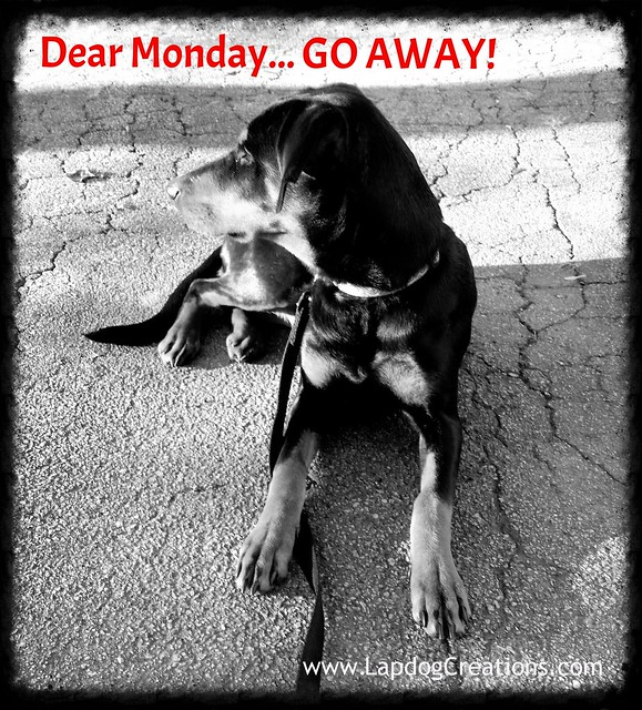 Doberman Puppy wishes Monday would stay away