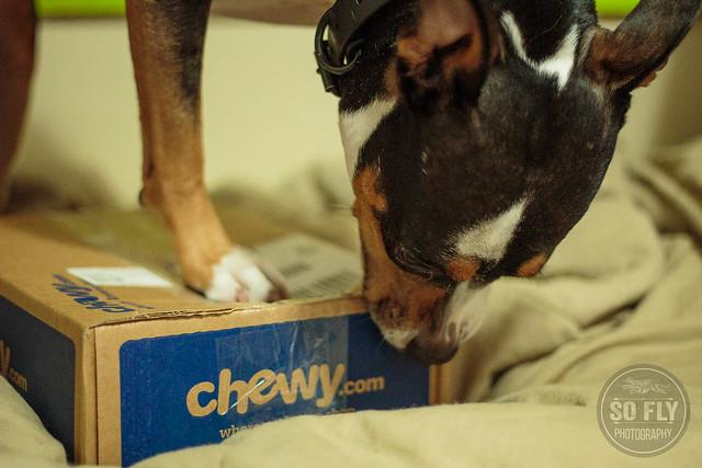 Chewy Wellness Core-7736