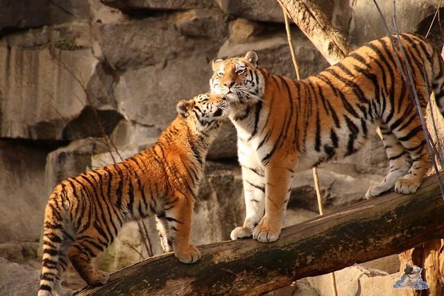 Tierpark Berlin 25.12.2051   59