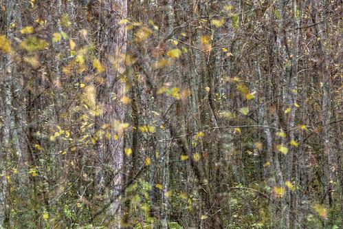 tree nature suomi finland leaf branch multipleexposure twig trunk birch tripleexposure multiexposure skrubu keuruu pni pekkanikrus hotellikeurusselkä