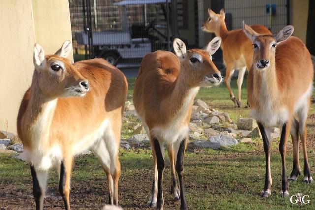 Besuch Zoo Rostock 13.12.201582