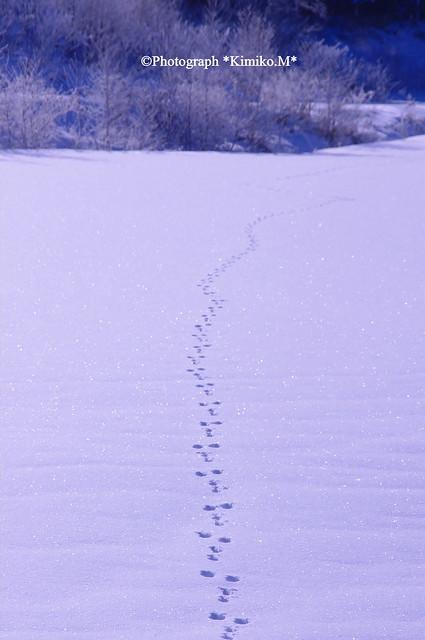 ウサギさんの足跡